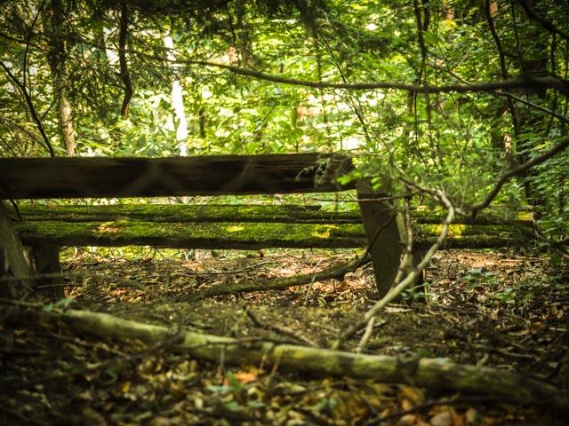 skog...foto: AntoniaB © 2015
