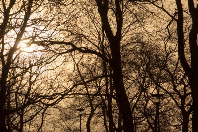 träd...foto: AntoniaB 2016