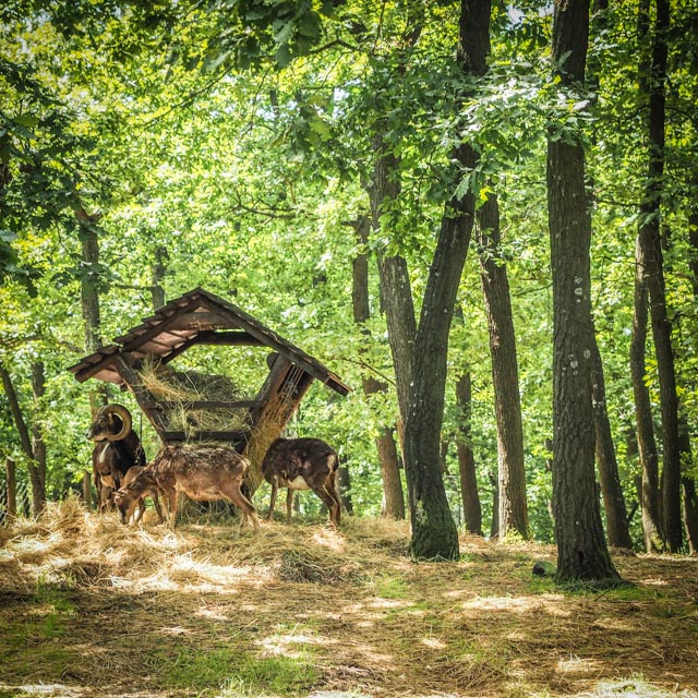 skogsliv...foto: AntoniaB © 2016