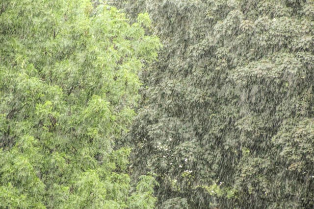 regn...foto: AntoniaB © 2016